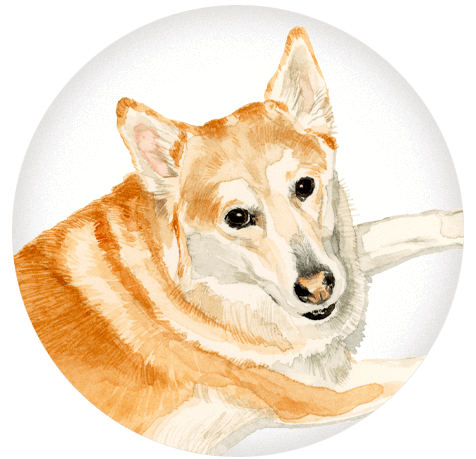 An illustration of a friendly dog laying down.